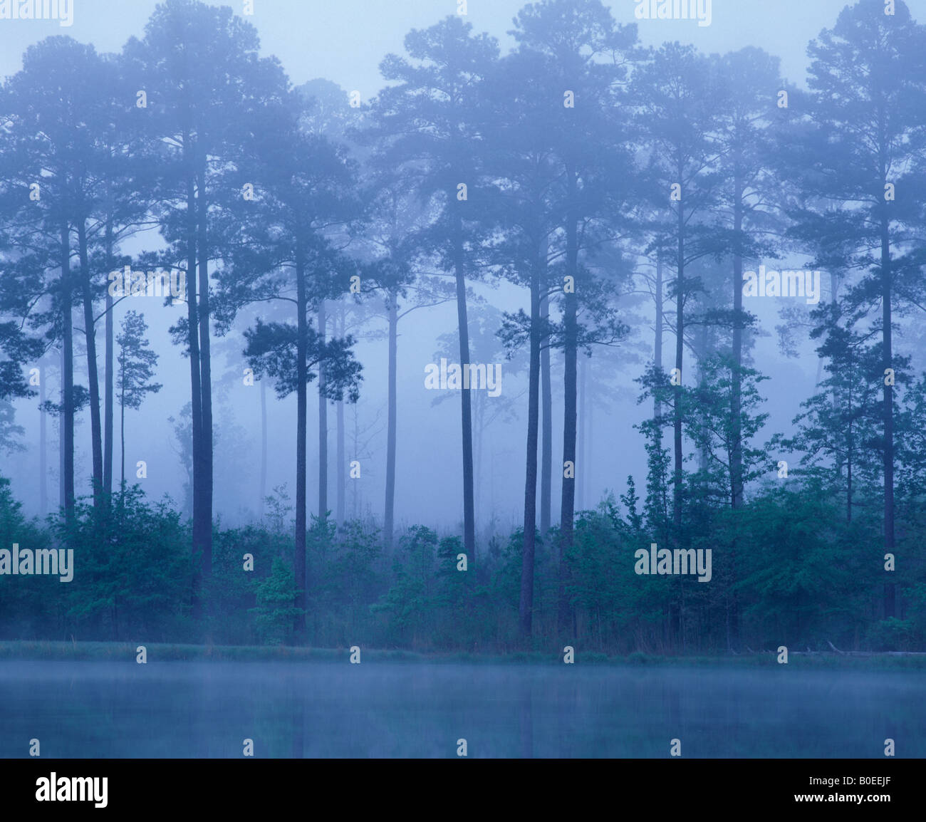 Monochromatic Fog District of Columbia