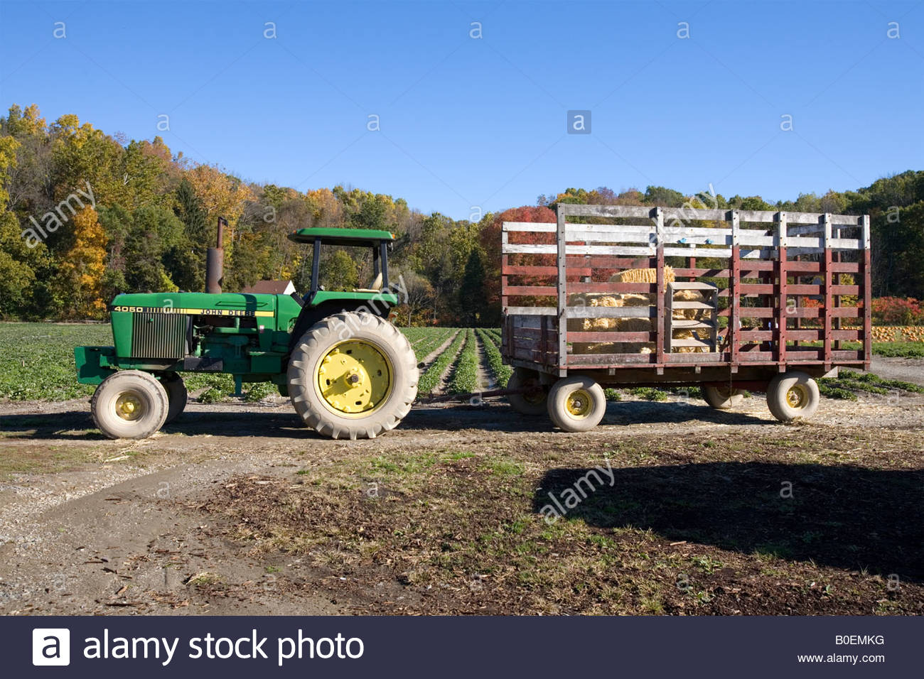 Tractor Pulling Trailer : Farm tractor pulling hay trailer for ride stock photo
