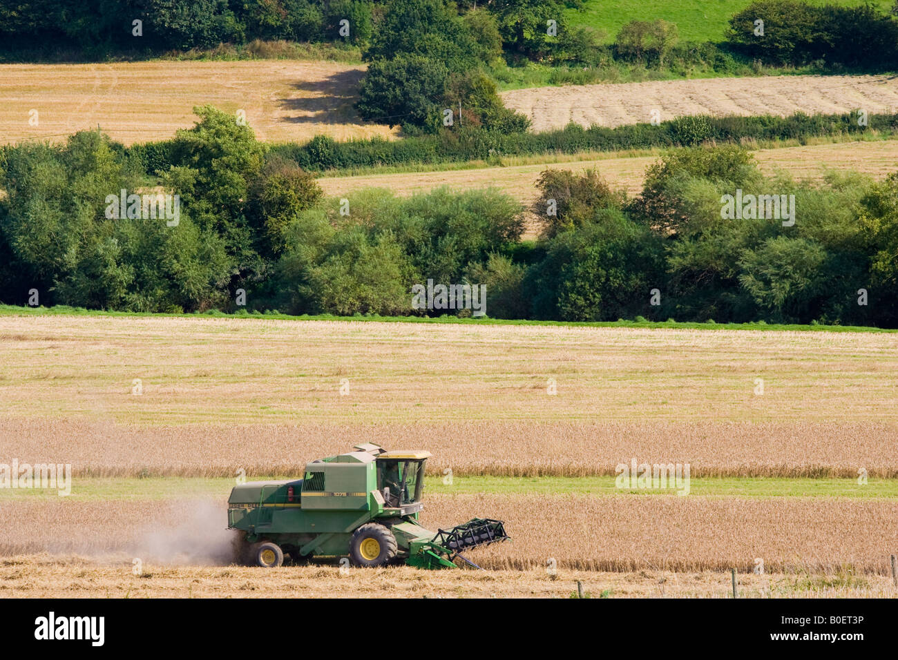 Combine harvester in a wheat field Herefordshire England United Kingdom - Stock Image