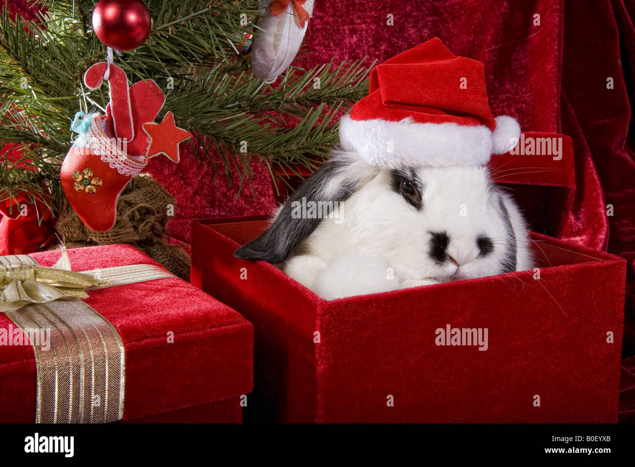 The Christmas Bunny.Cute Christmas Bunny Under The Tree On Gift Box With Red