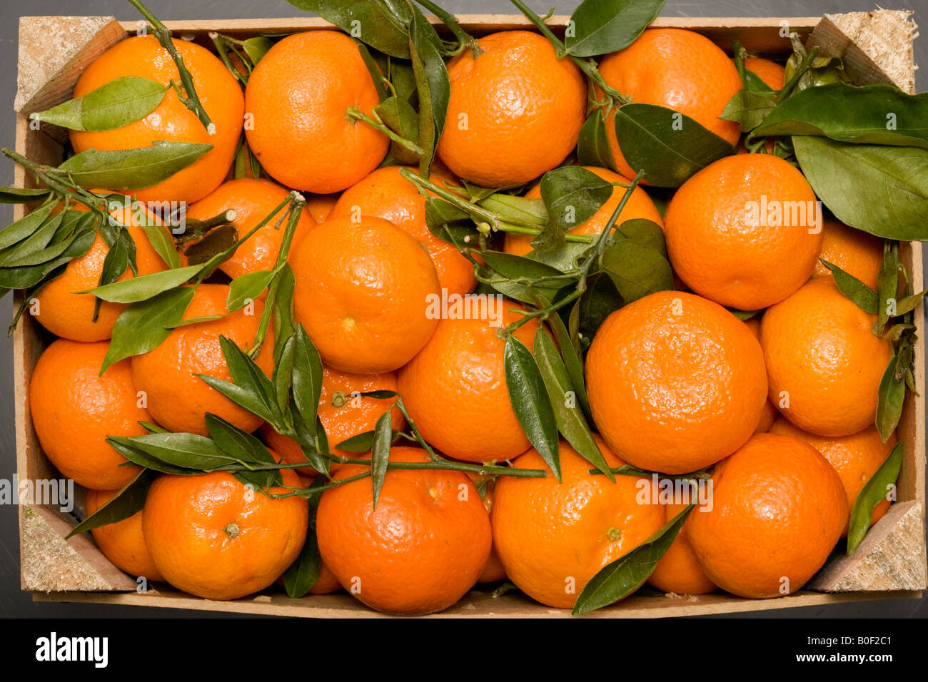 Box of clementines London England United Kingdom - Stock Image