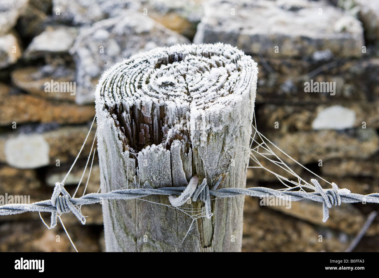 Hoar frost covered wooden barbed wire fence post Oxfordshire England United Kingdom Stock Photo