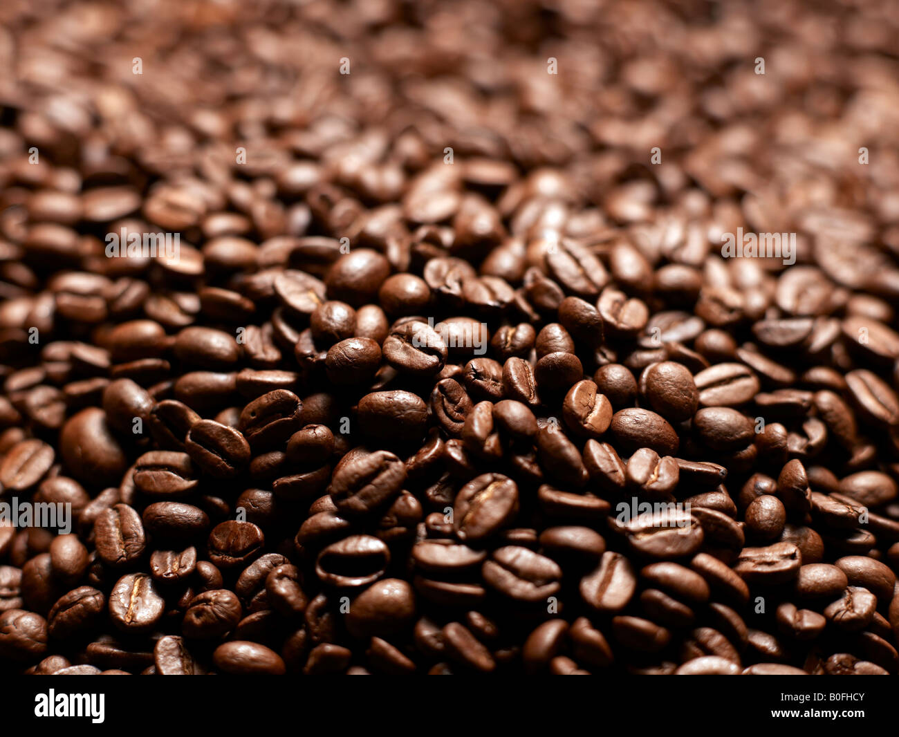coffee beens - Stock Image
