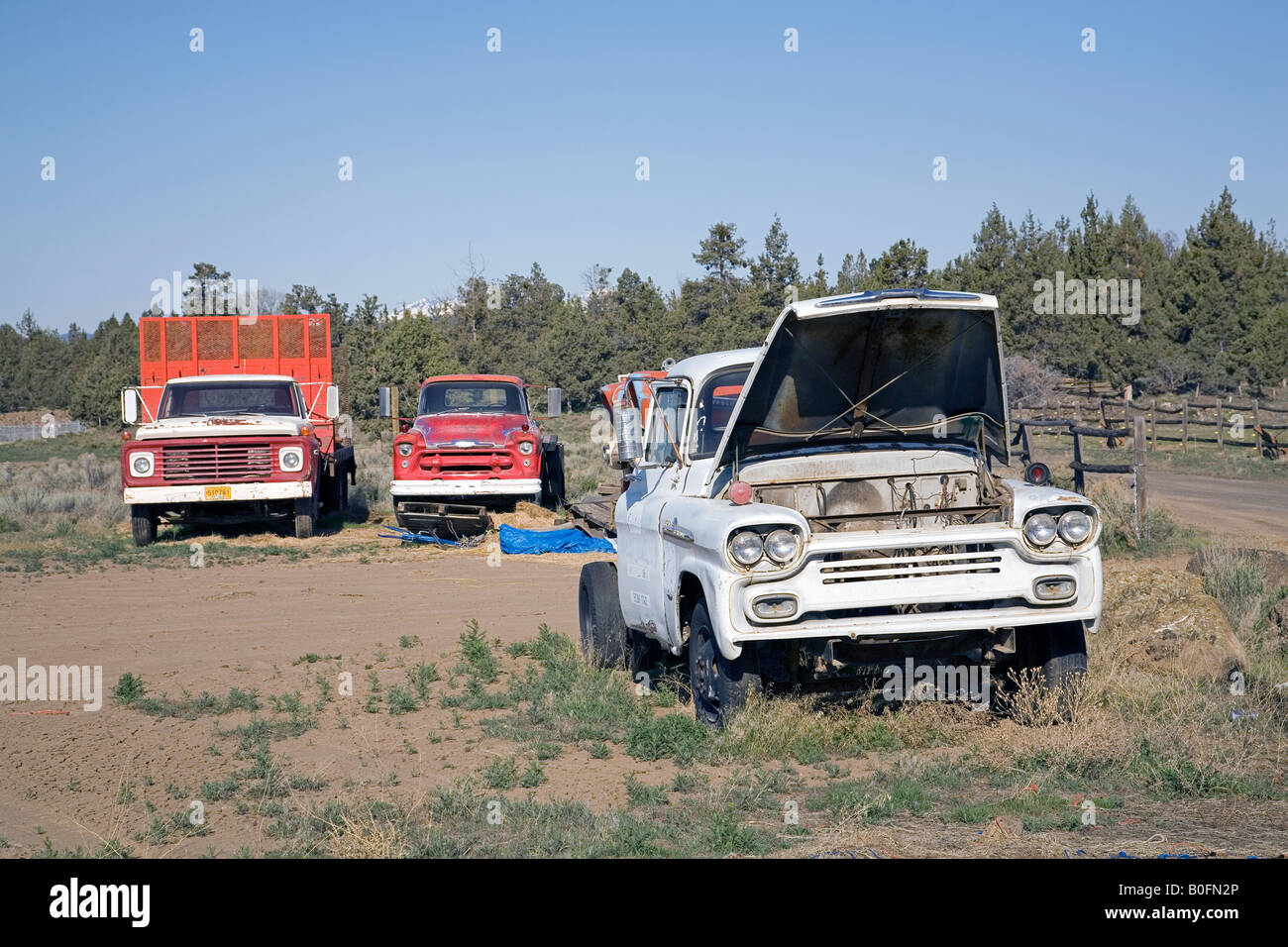 A selection of old Chevrolet trucks and pickup trucks in a field ...