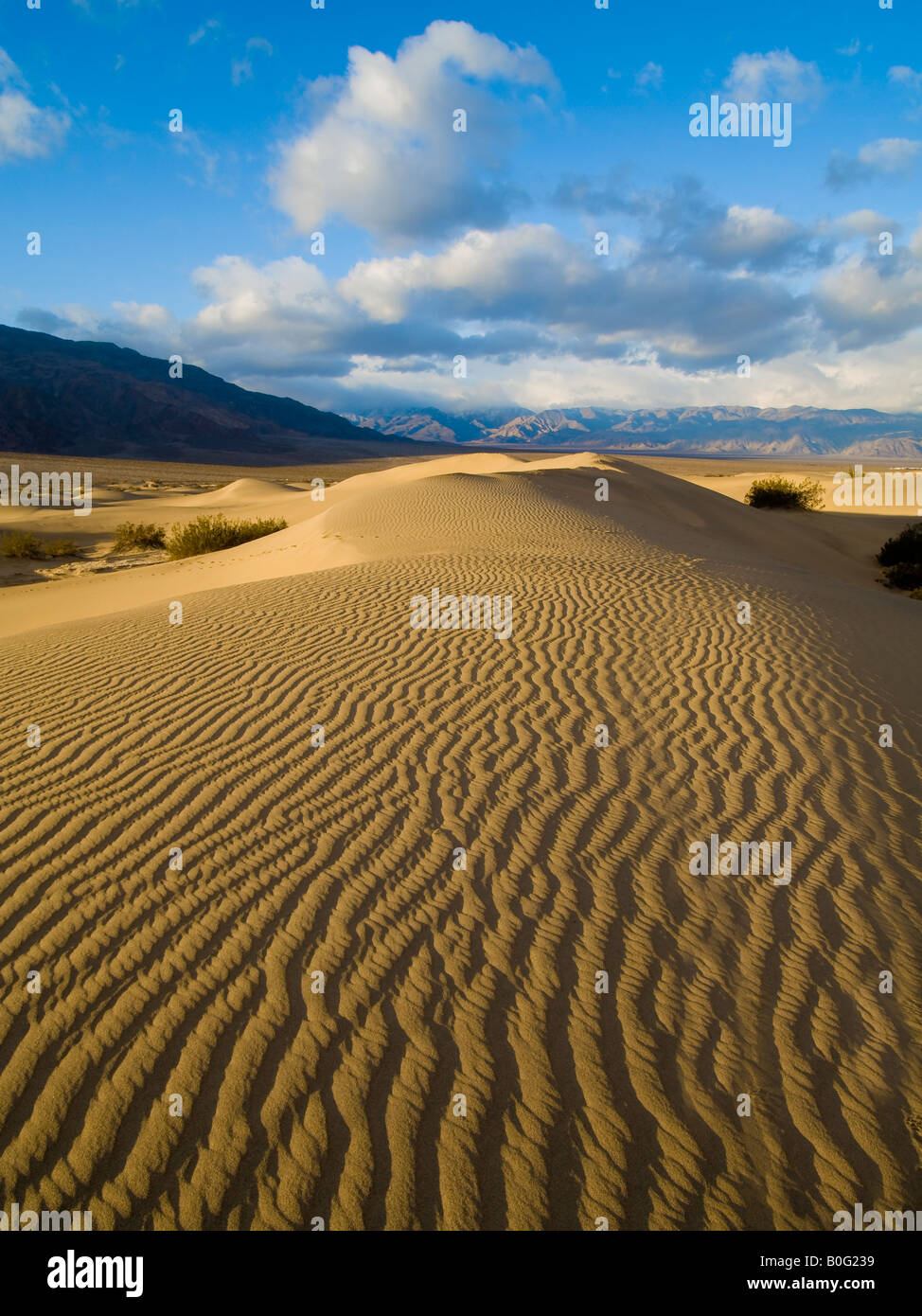 Stovepipe Wells Sand Dunes Death Valley National Park California USA - Stock Image