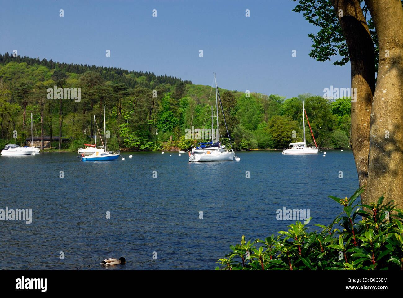 Lake Windermere at the southern end in Cumbria in the United Kingdom - Stock Image
