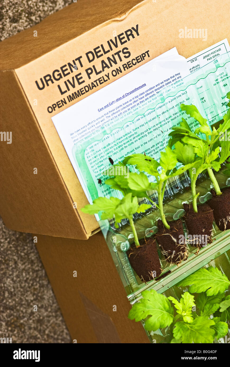 Live plants delivered by postal mail order opened prior to planting - Stock Image