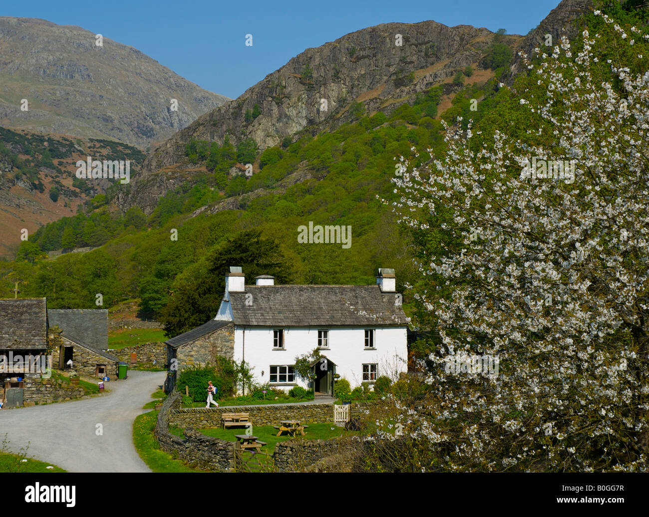 Yew Tree Farm near Coniston, onced ownd by Beatrix Potter, Lake District National Park, Cumbria, England UK - Stock Image
