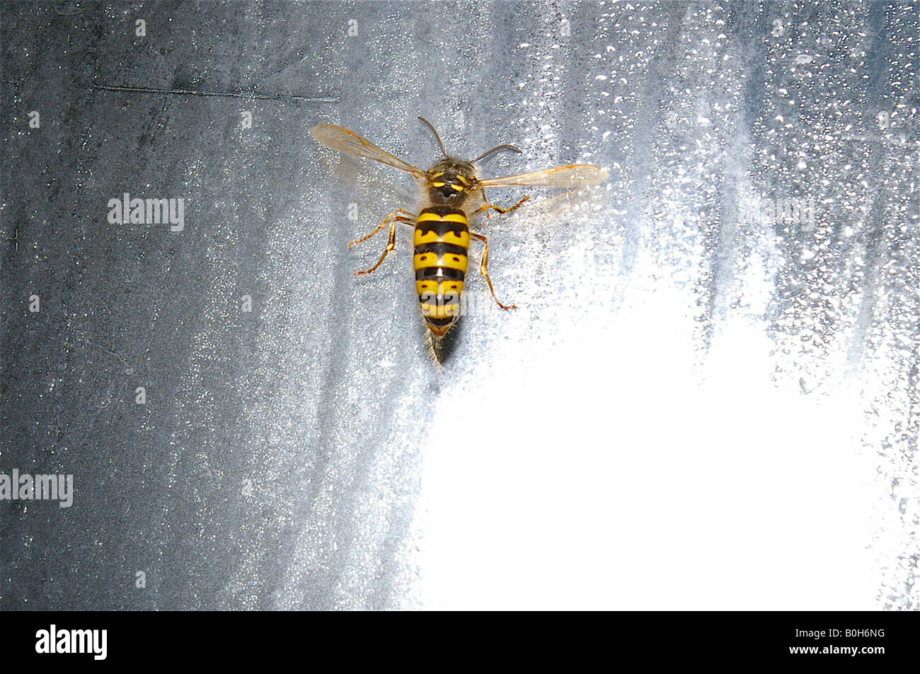 Bee On A Window Stock Photos & Bee On A Window Stock Images - Alamy
