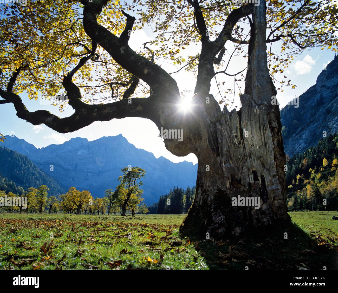 Grosser Ahornboden, autumn, Mt. Spritzkarspitze, Eiskarln, Karwendel Range, Tirol, Austria - Stock Image
