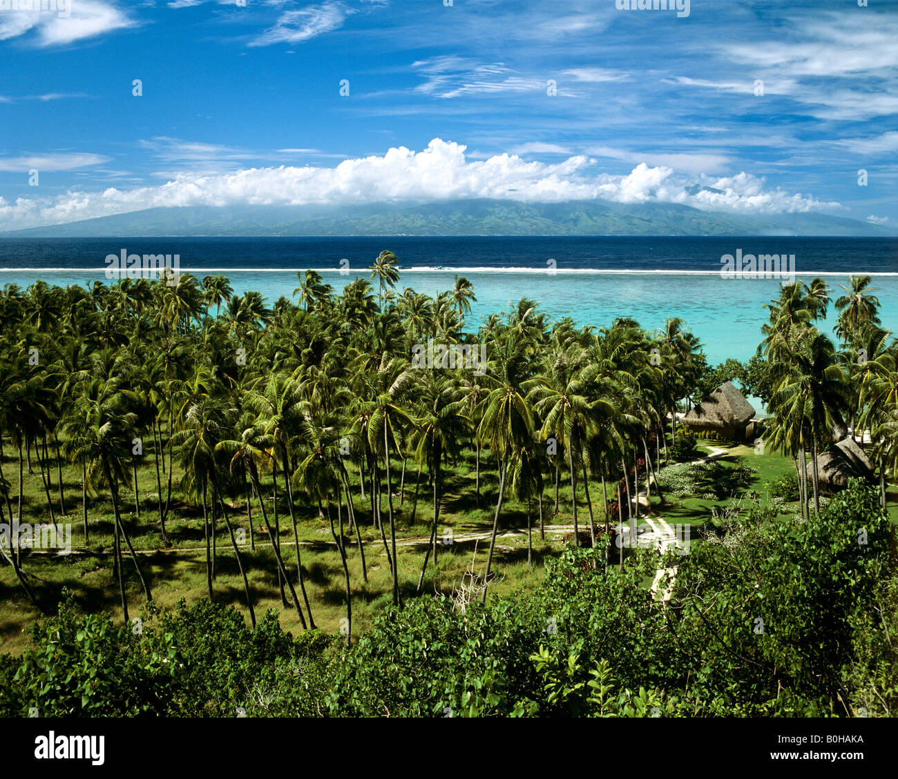 Palm trees and clear blue waters, Moorea, Society Islands, French Polynesia, South Pacific, Oceania - Stock Image