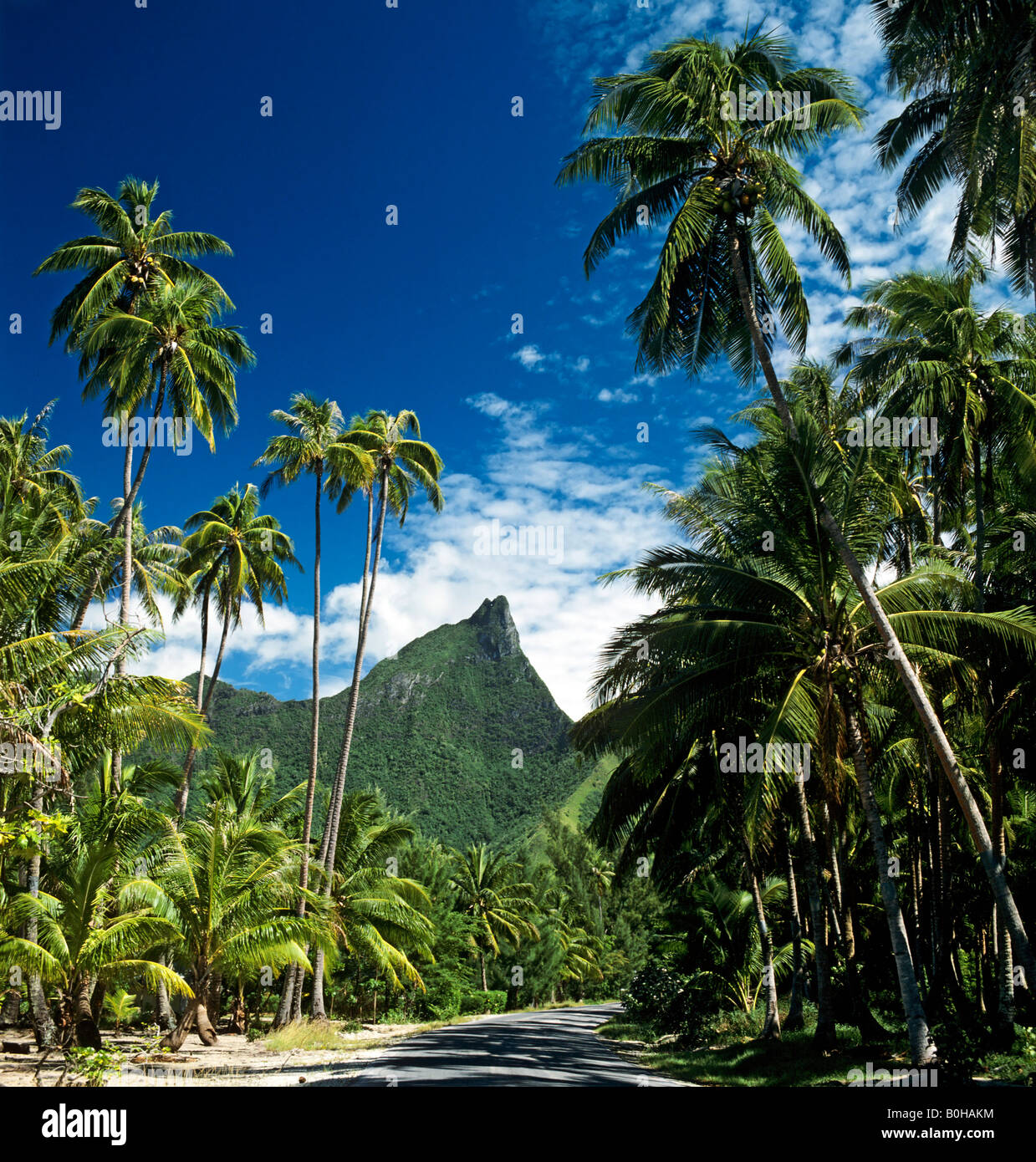 Palm trees, Moorea, Society Islands, French Polynesia, South Pacific, Oceania - Stock Image