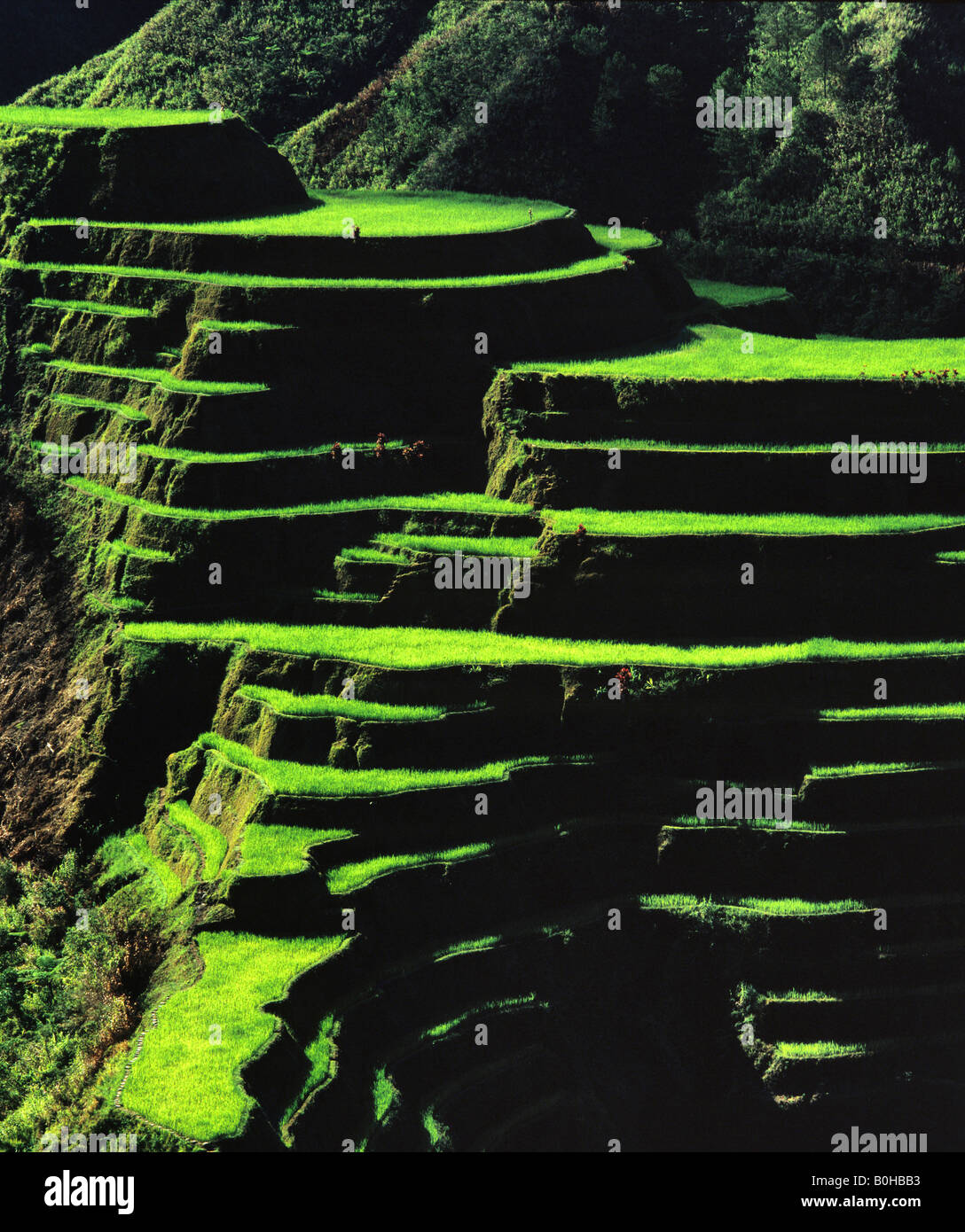 Rice terraces, Banaue, Ifugao Province, Luzon, Philippines - Stock Image