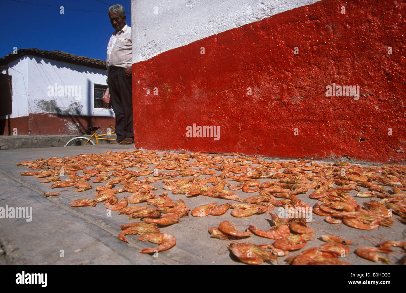 Camarones, crabs laid out to dry, Mexcaltitan Island, Nayarit, Mexico - Stock Image