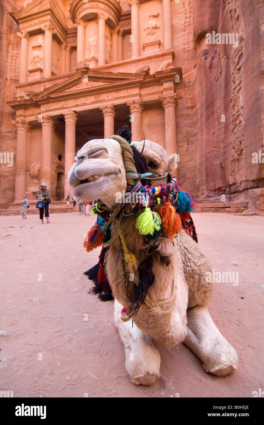 Camel Expressions Stock Photos & Camel Expressions Stock Images - Alamy