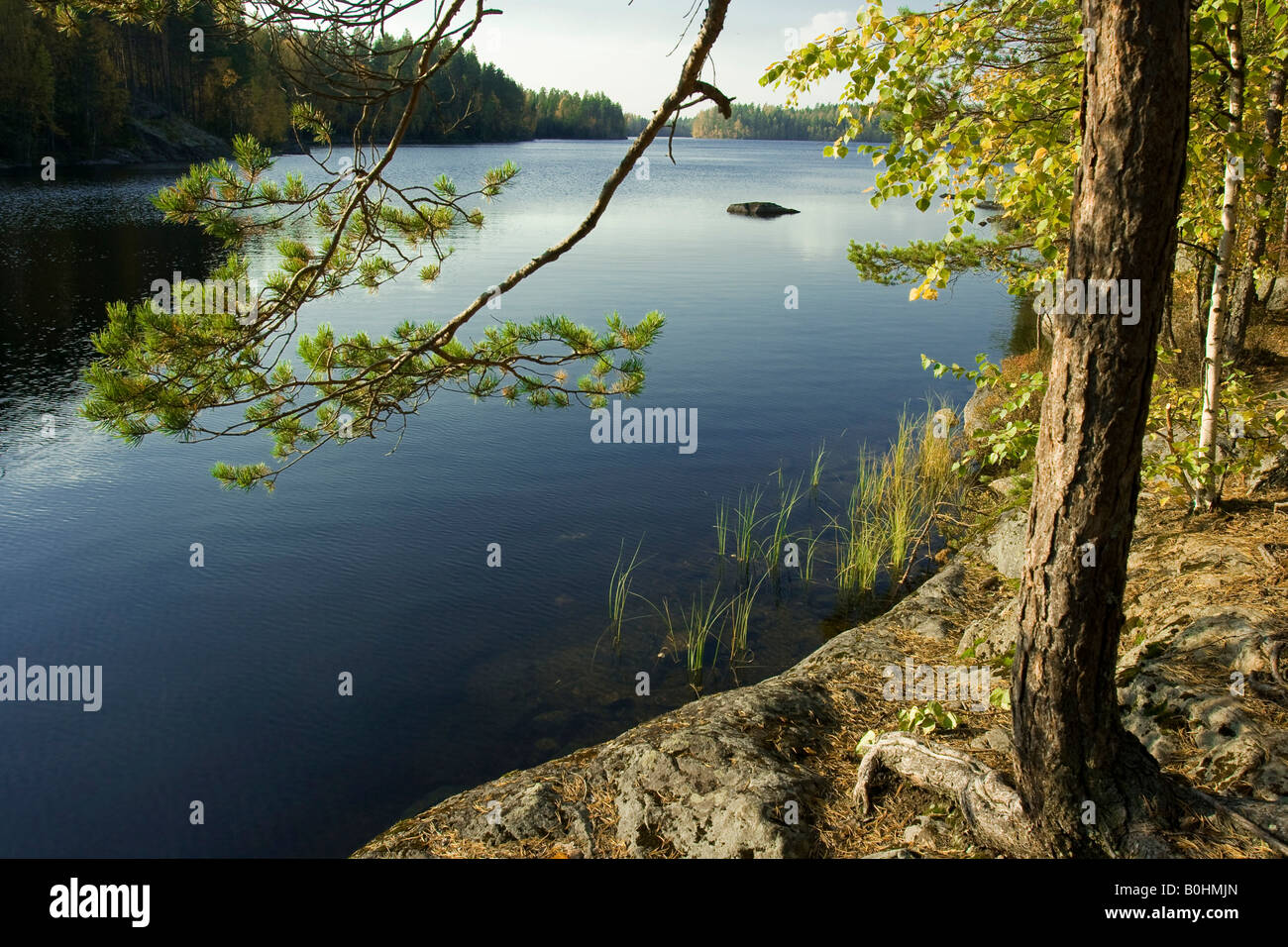 Lake surrounded by pine forest, Isojaervi National Park, Finland, Scandinavia - Stock Image