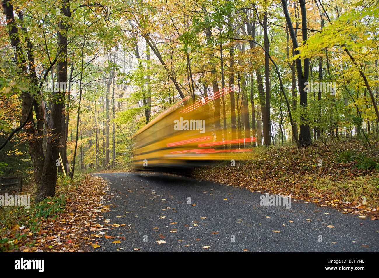 A school bus blurs by along a tree lined rural country road on an overcast day in autumn - Stock Image