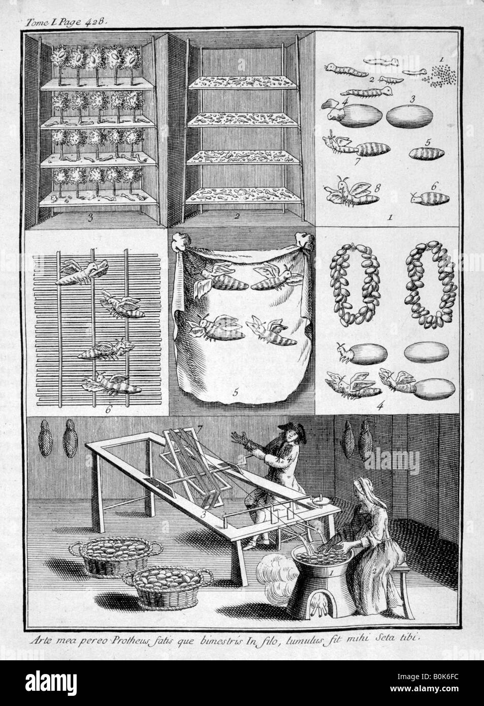 The breeding of silk worms, 1775. Artist: Unknown - Stock Image