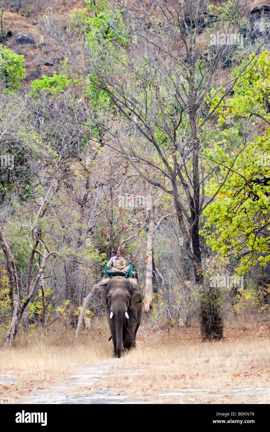 Elephant and Mahoot emerge from Sal Forest - Stock Image