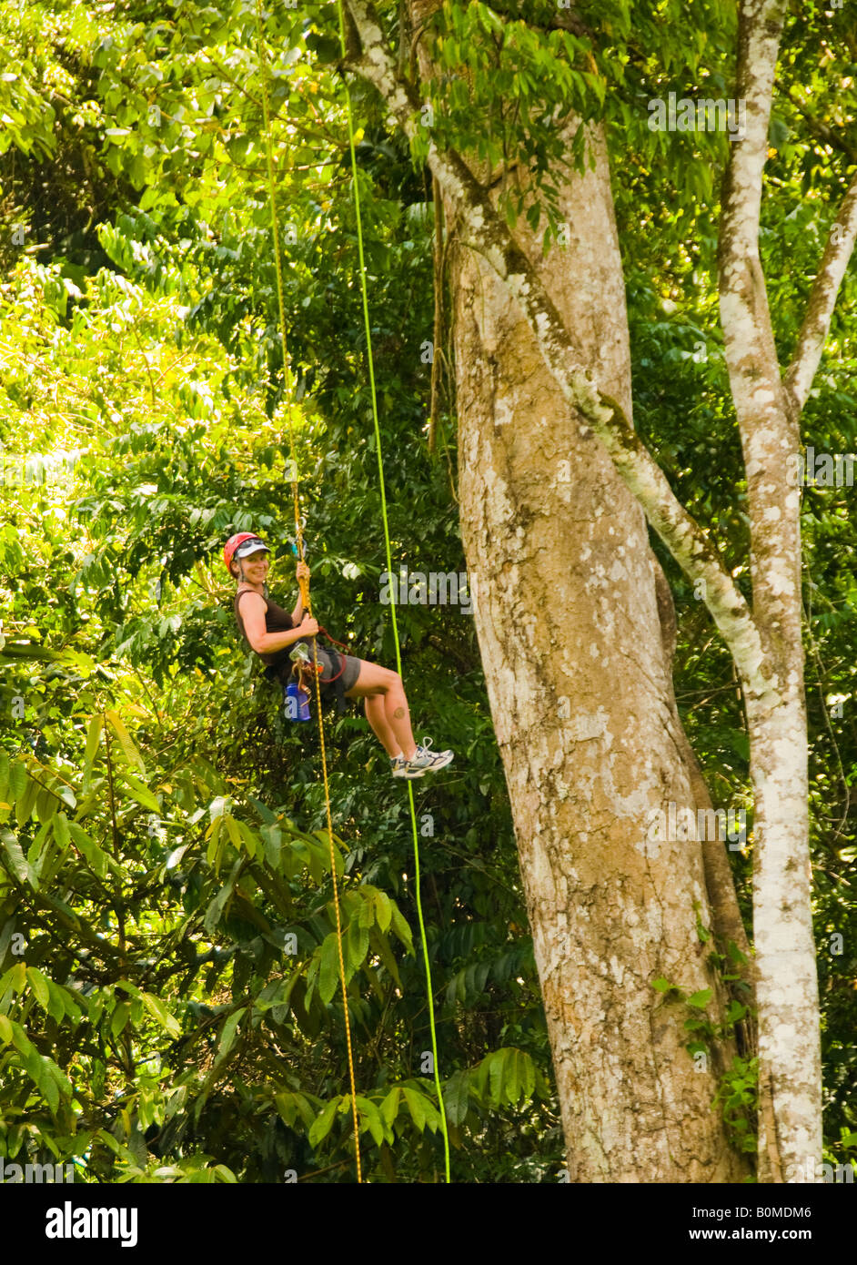 COSTA RICA  Adventuresome Woman repelling down towering jungle tree on zip line canopy tour. Pacuare River. Caribbean - Stock Image