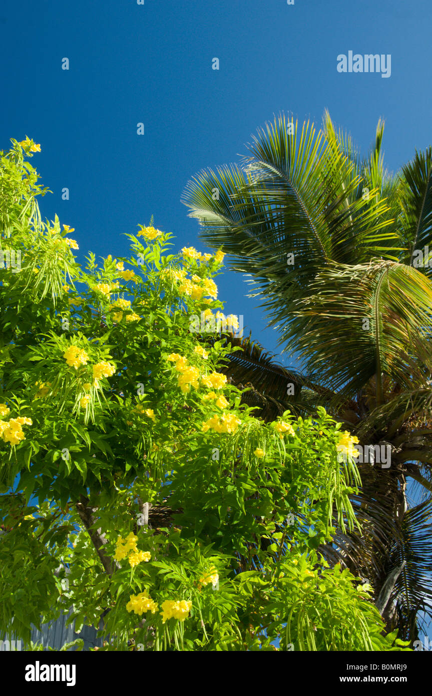 A Palm Tree With The Yellow Flowers Of The Tree In Cockburn Town