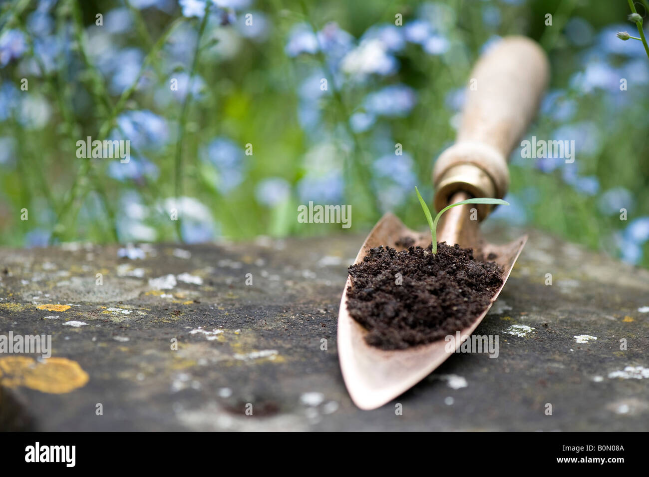 Flower seeding in compost on a copper hand trowel. UK - Stock Image