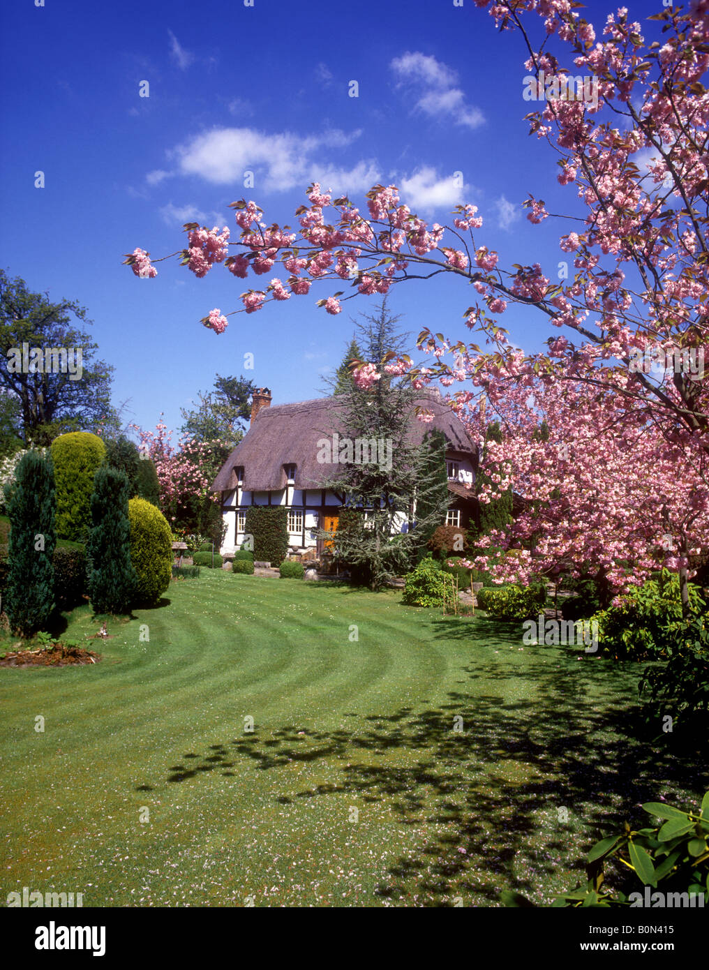 Cottage at springtime in the New Forest village of New Forest - Stock Image