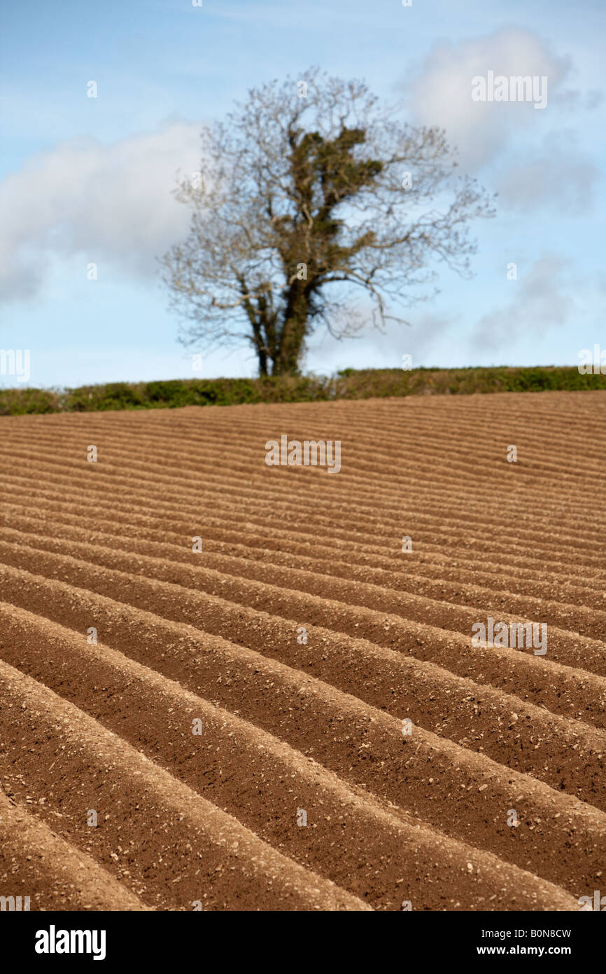 freshly ploughed field with hedges and tree in the background in county down northern ireland - Stock Image