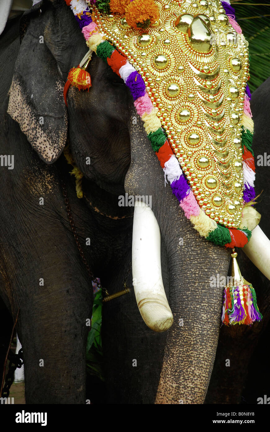 A Decorated Elephant During The Temple Festival Kerala India Stock