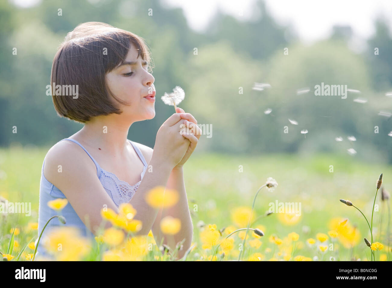 young female child sitting in field of buttercups blowing a dandelion with room for copy - Stock Image