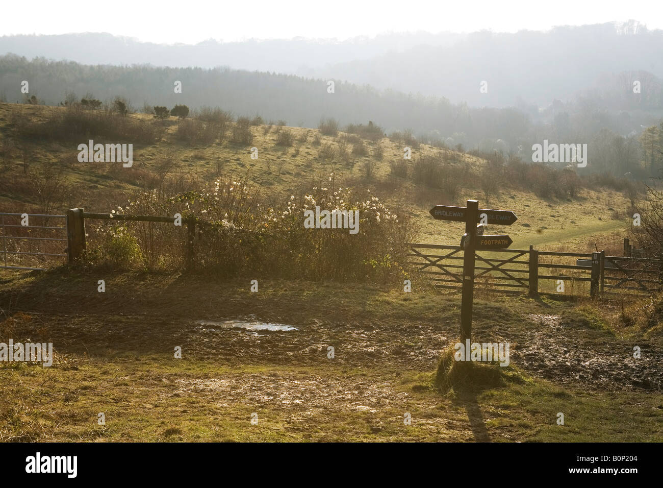 Chiltern hills on a dusky summer evening in the English countryside - Stock Image
