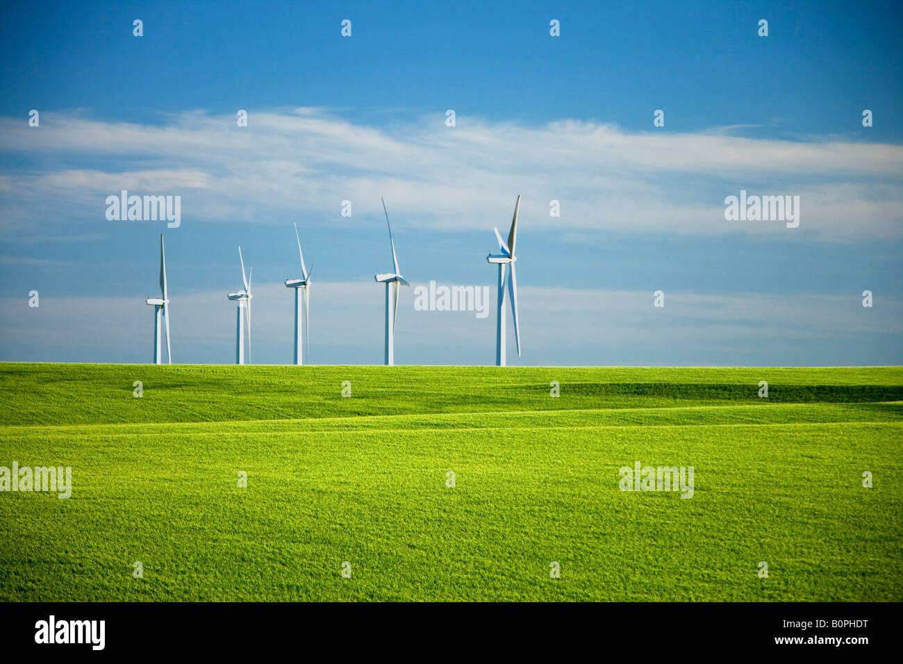 Wind Turbines in immature wheat field. - Stock Image