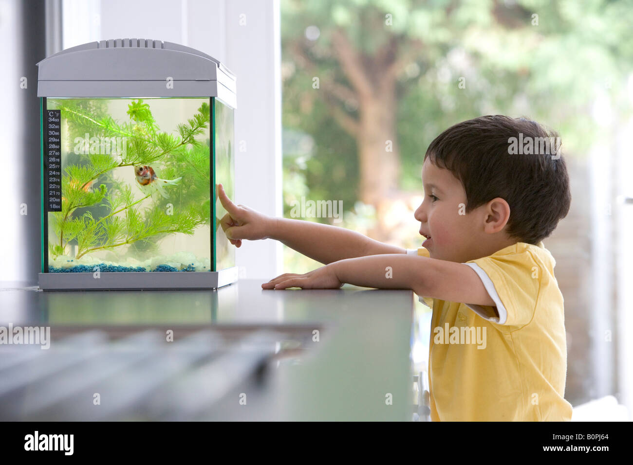Little boy is looking at the aquarium - Stock Image
