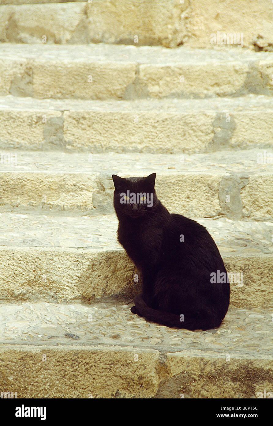 Black cat sitting on stairs Stock Photo - Alamy