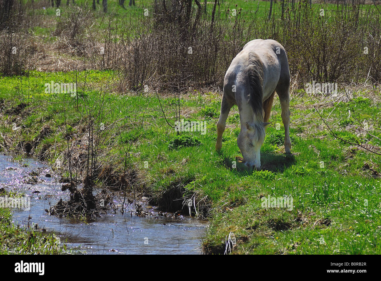water horse torrent