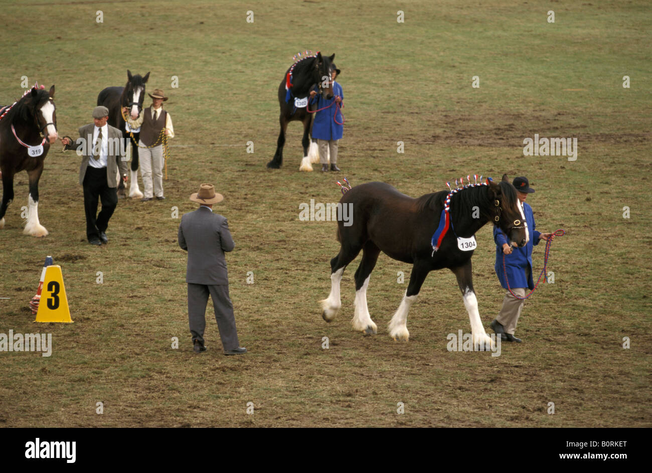 Competition in the Shire Horse Mare Class Sydney Royal Easter Show New South Wales Australia Stock Photo