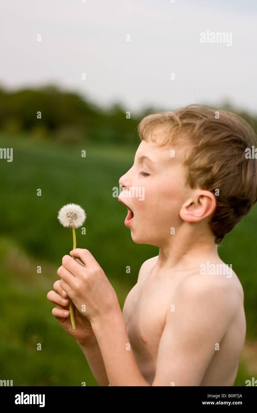 pimpandhost boys young boy in field bowing dandelion clock - Stock Image