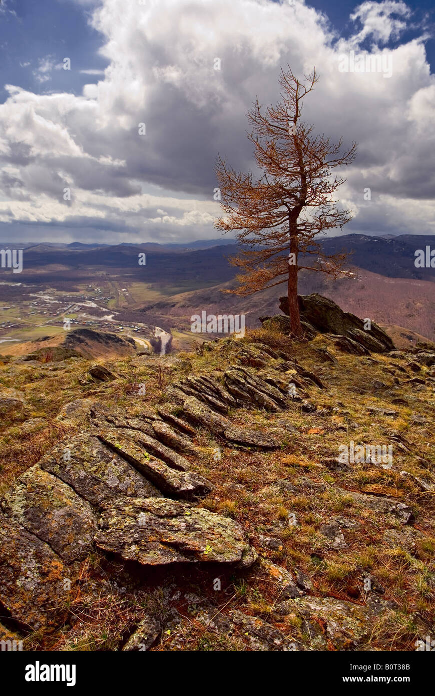 Lonely leafless tree on the Kurkak mountain - Stock Image