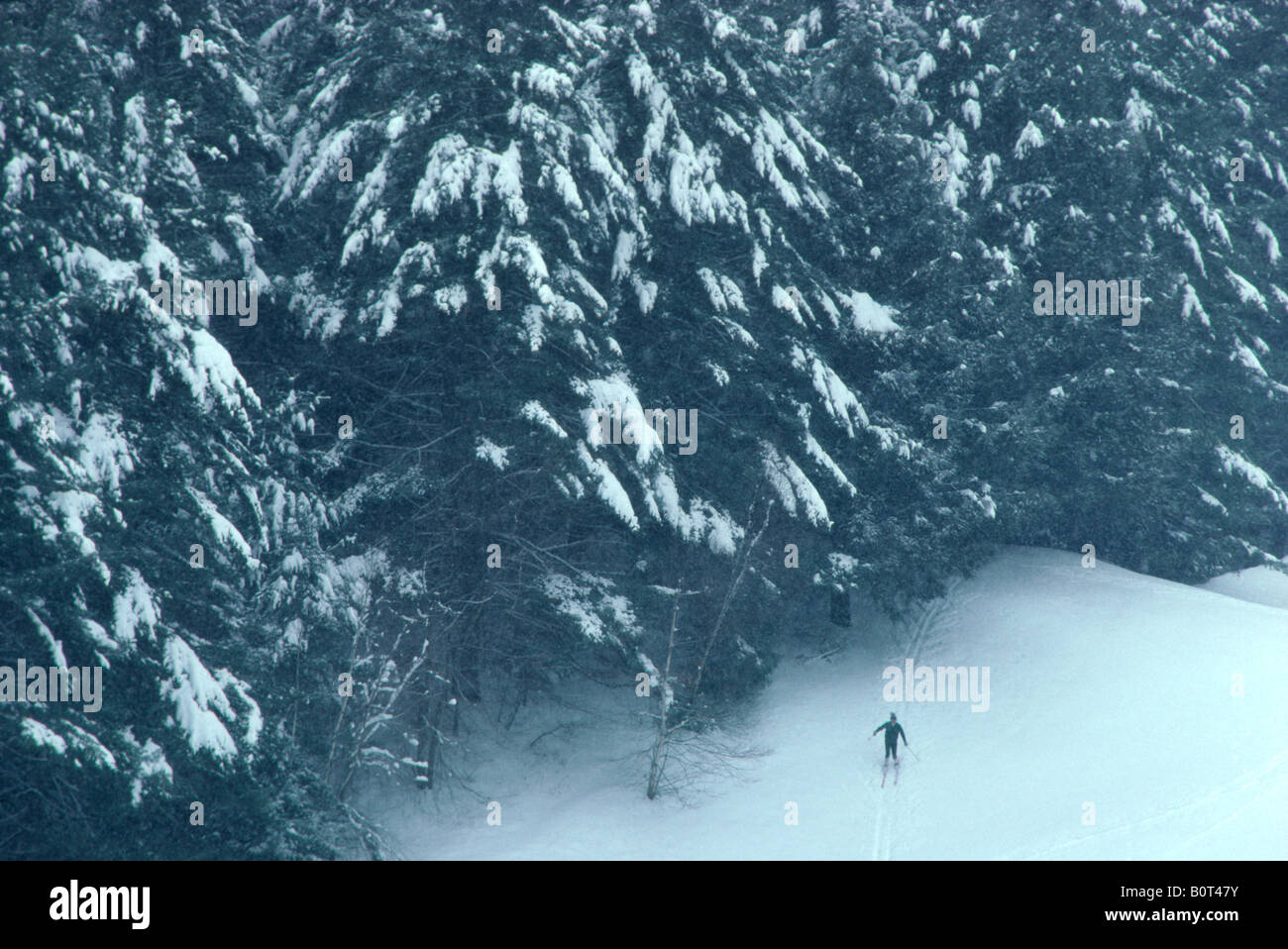"""Cross Country"" skier at ""Dartmouth College"" Hanover NH Stock Photo"