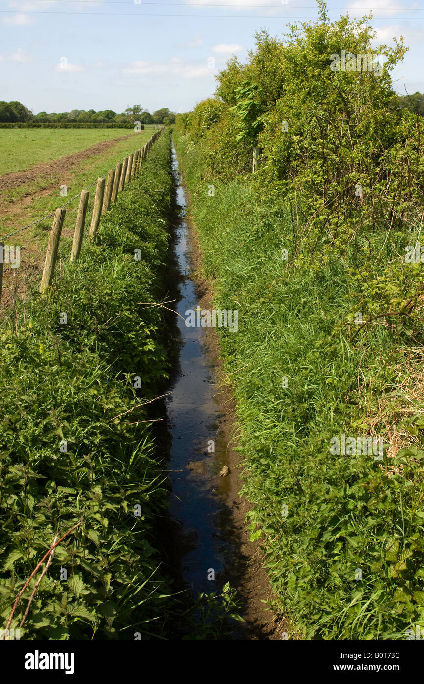 Drainage ditch between hedge and fence on field boundry Cumbria England Stock Photo