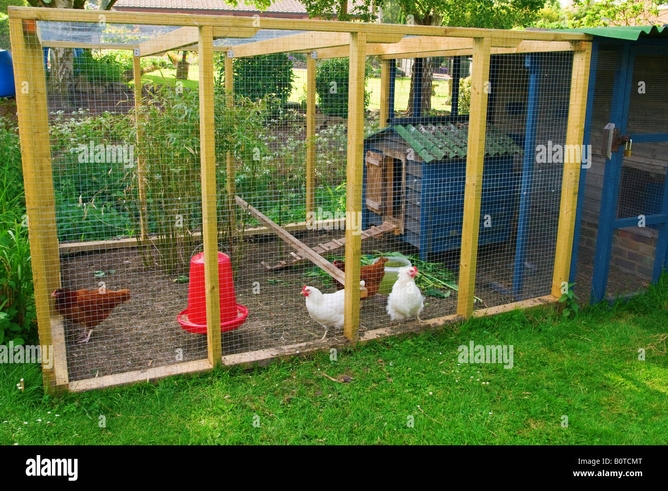 Free range chickens and coup - Stock Image