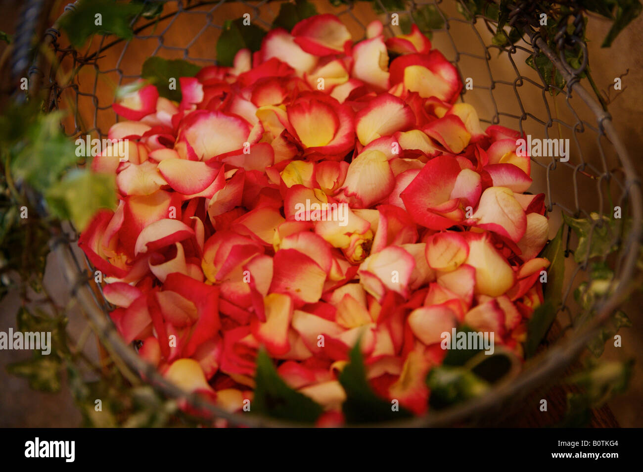 Basket of petals to be thrown as confetti - Stock Image