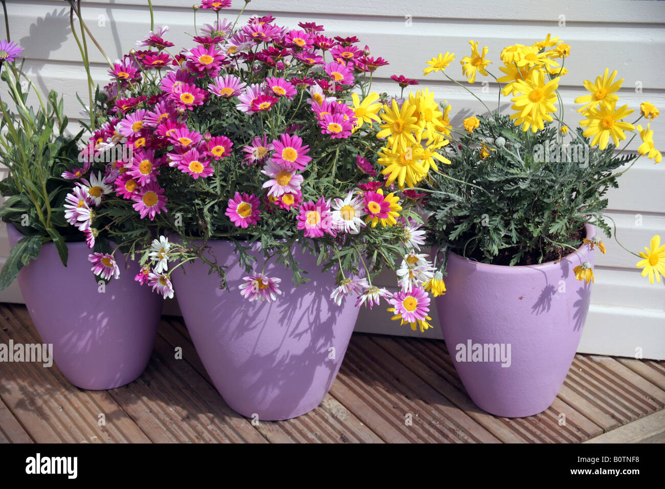 colourful flowerpot display - Stock Image