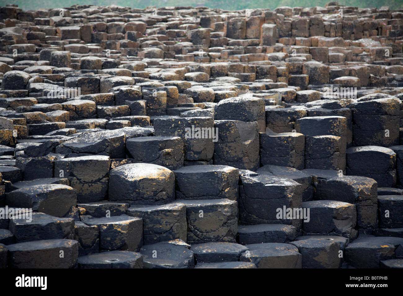red basalt hexagonal rock formations at the giants causeway county antrim northern ireland uk - Stock Image