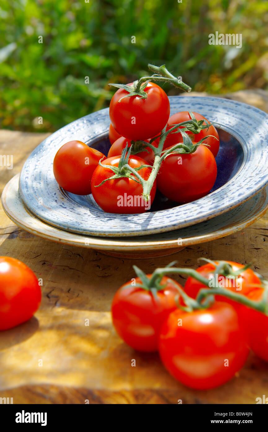 Fresh organic tomatoes on the vine - Stock Image