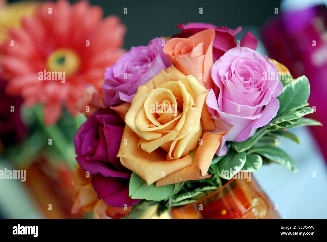 Pink, orange, red and purple roses used as wedding flowers - Stock Image