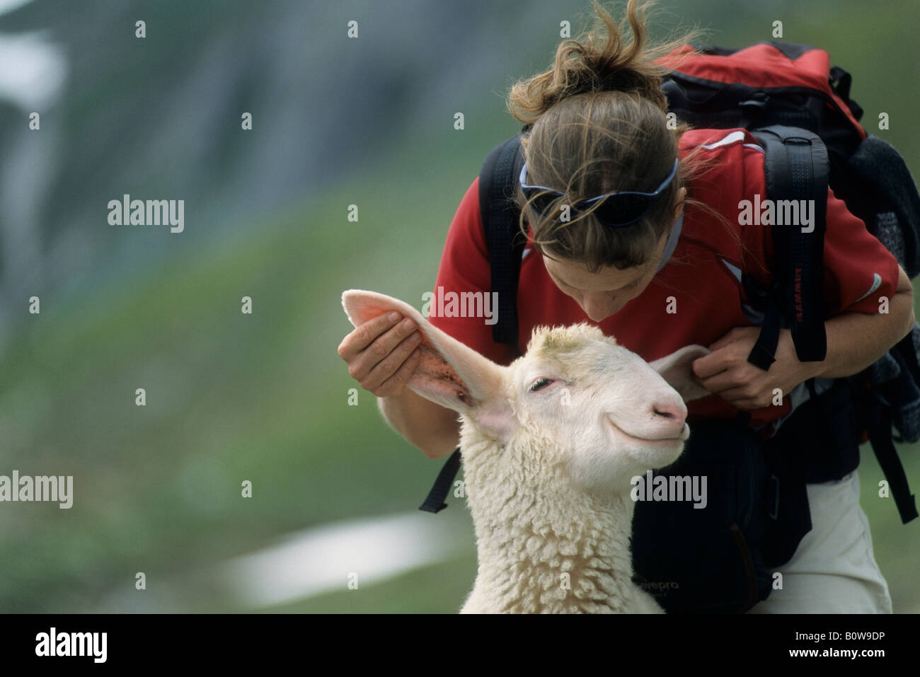 Woman playing with a happily grinning sheep, image manipulation - Stock Image
