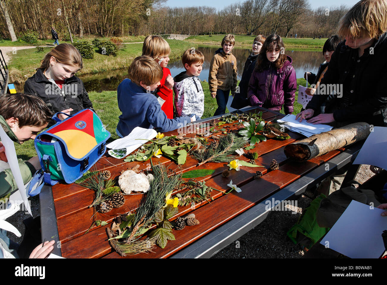 Children studying natural history during a class field trip, table covered in leaves, twigs and fruit collected - Stock Image