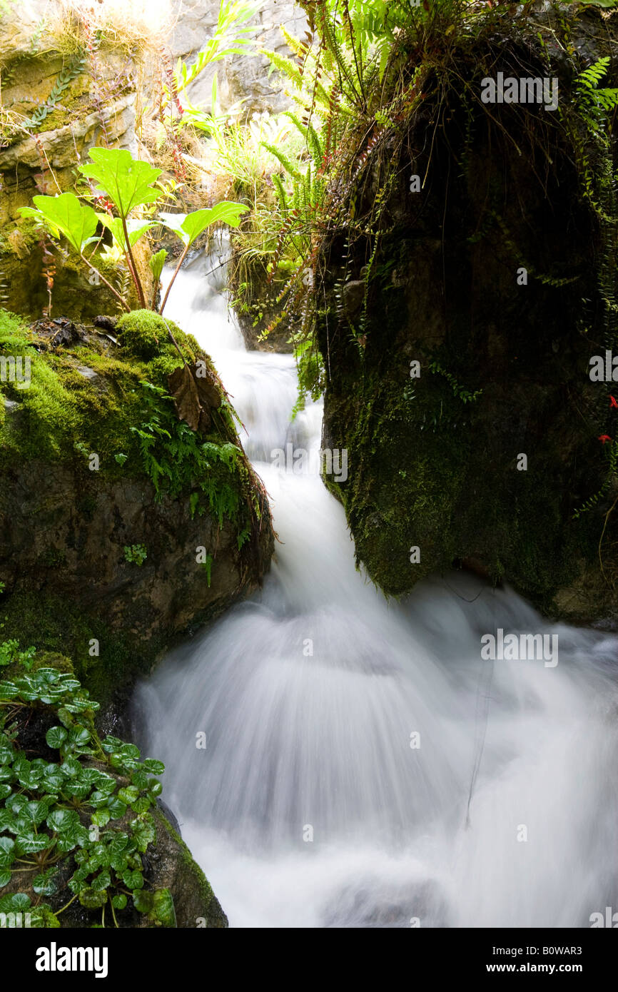 Rushing stream in the parkland of the Botanical Gardens, National Orchard Garden in Singapore, Southeast Asia - Stock Image