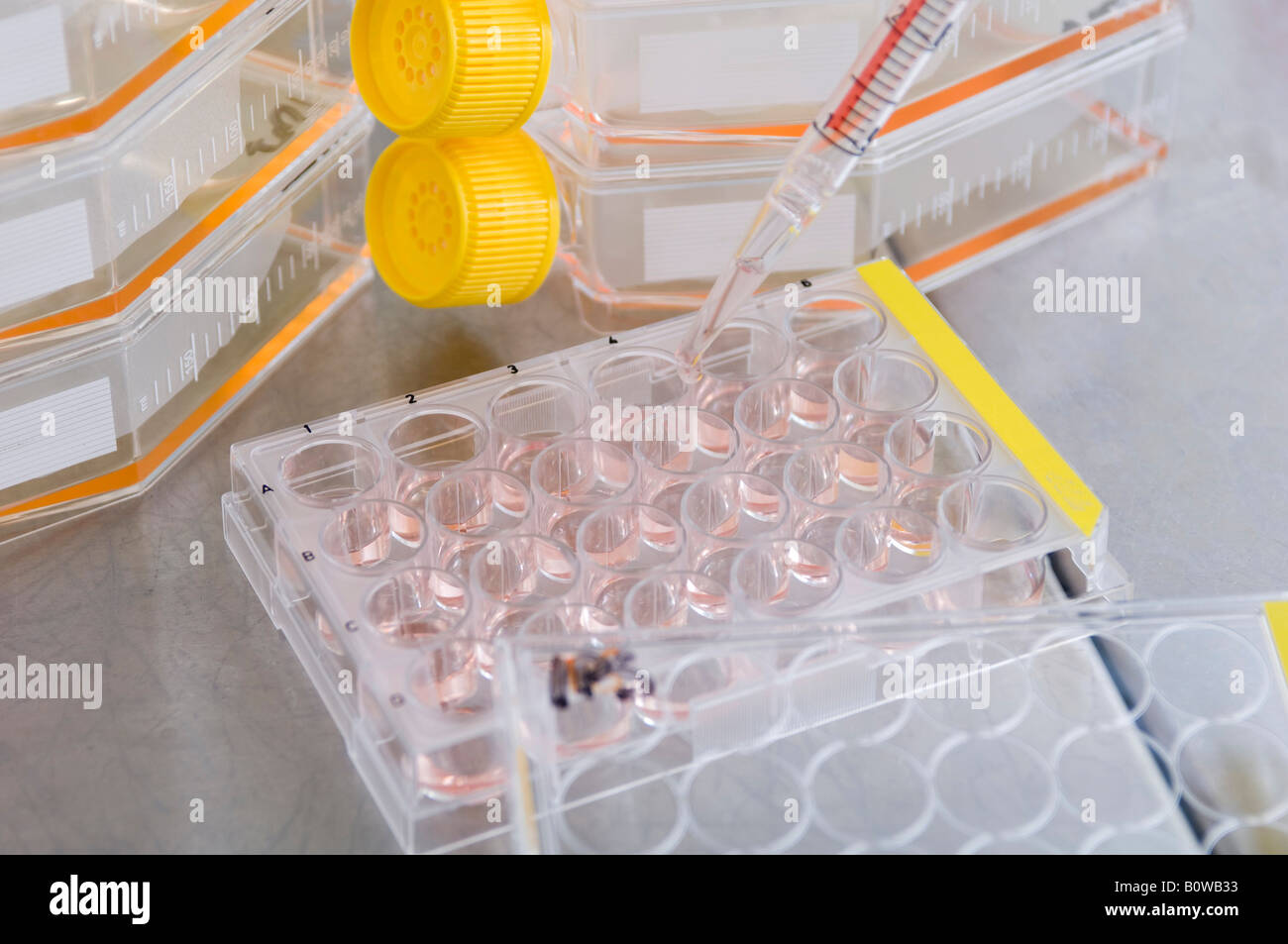 Stem cell research, Max Planck Institute for Molecular Genetics, scientist, stem-cell cultures, Berlin, Germany - Stock Image